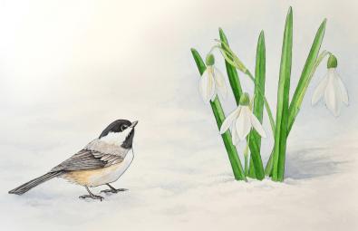 Chickadee and snowdrops