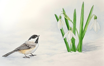 Chickadee and snowdrops