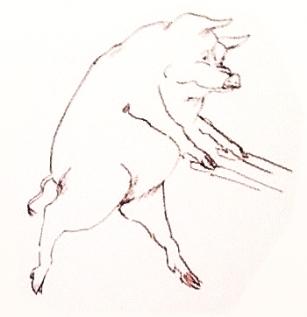Pig 3 sketch