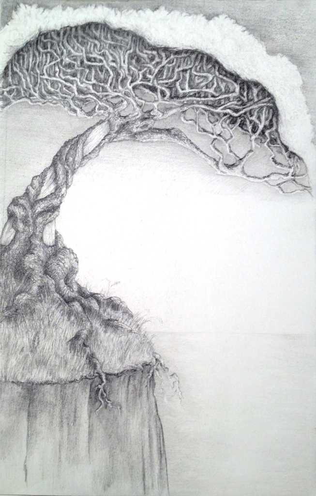 Pencil sketch of a gnarled tree with many twisting branches and crowned with silvery leaves growing on a cliff. It's roots are showing below the top of the cliff. In the background is a smooth sea.