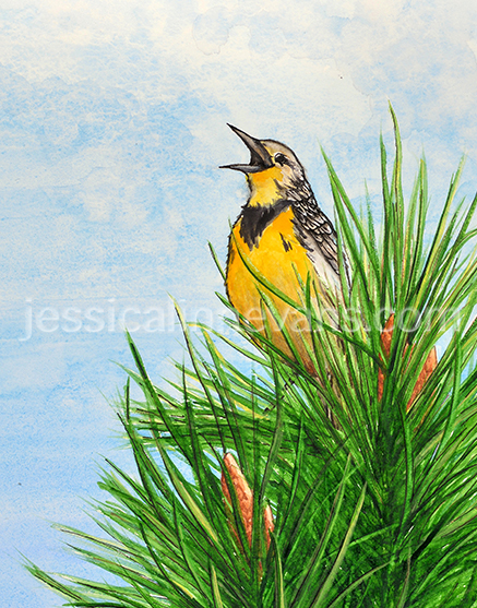 Meadowlark_web_watermark