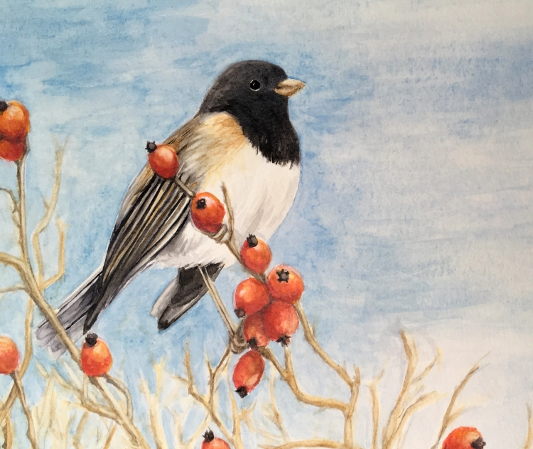 Junco and rose hips_detail