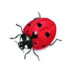 ladybug-vignette_sm