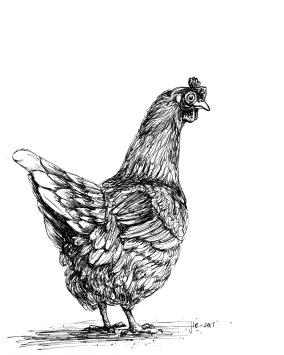 chicken WHCC