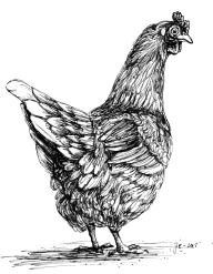 chicken (cropped)