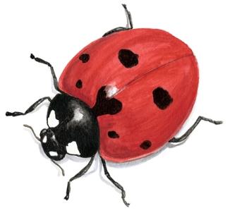 Ladybug vignette