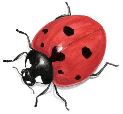 ladybug vignette_web2
