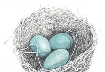 Nest and Eggs cropped
