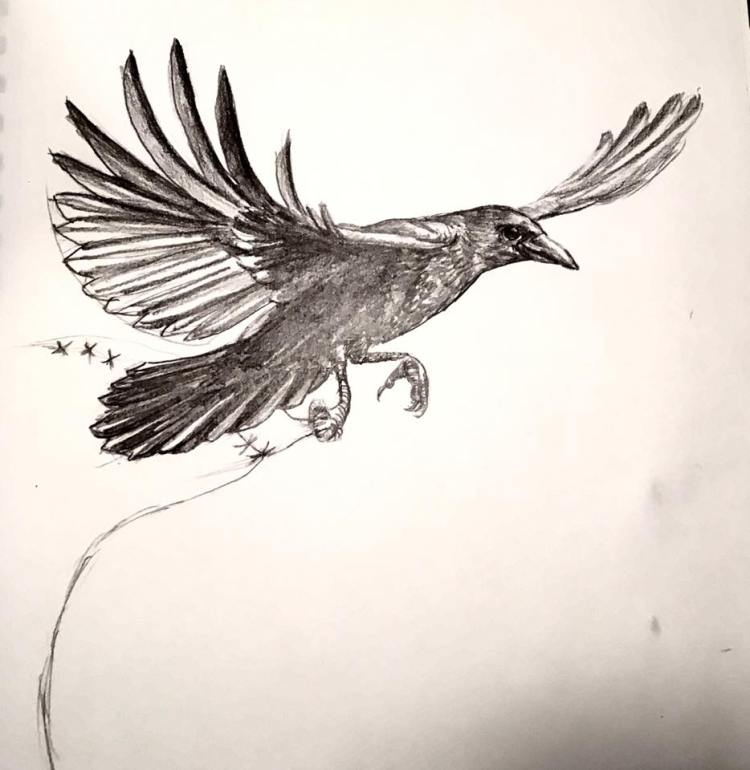 Pencil sketch of a realistic smiling crow with outstretched wings and something grasped in one talon.