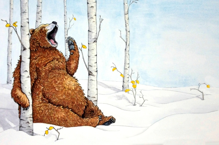 Large brown bear yawning in aspen trees on a snowy landscape